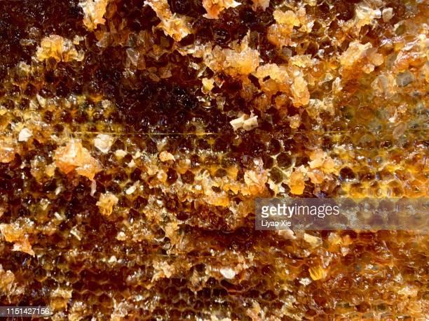 honeycomb slice - liyao xie fotografías e imágenes de stock