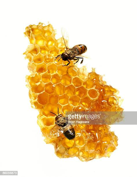 honeycomb with bees - honeycomb stock pictures, royalty-free photos & images
