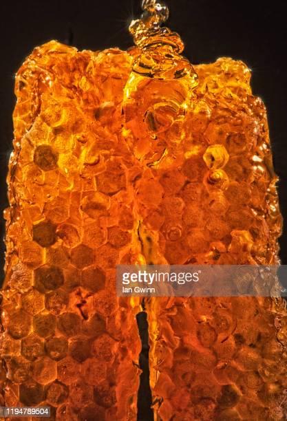 honeycomb_2 - ian gwinn fotografías e imágenes de stock