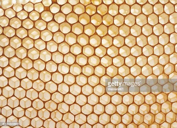 Honeycombs, close-up