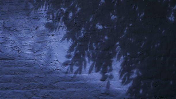 Honeysuckle shadows on white wall.