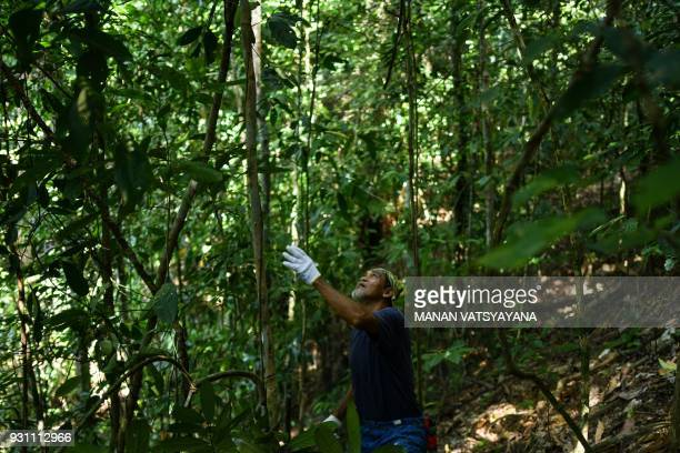HONEYThis photograph taken on February 11 2018 shows traditional Malaysian honey hunter Mohamad Khairi Mohamad Arshad cutting wood to make ladder for...