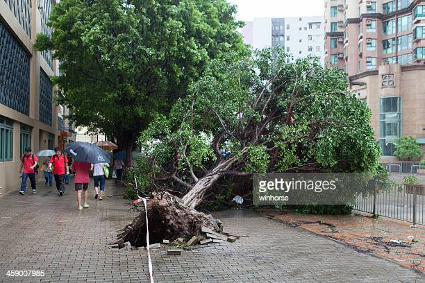 hong kong after typhoon - fallen tree stock pictures, royalty-free photos & images