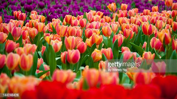 hong kong flower show - flower show stock pictures, royalty-free photos & images