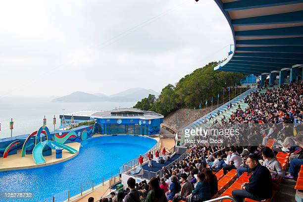 hong kong ocean park - hong kong stock pictures, royalty-free photos & images