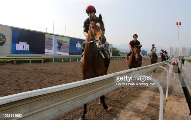 Hong Kong Vase runner Highland Reel going back to stable after gallop on the all weather track at Sha Tin HK Cup runner Deauille 05DEC17