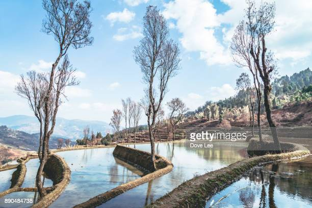 honghe hani rice terraces landscape - yuanyang stock pictures, royalty-free photos & images