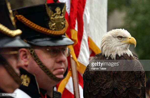 Honor Guard and an American Bald Eagle watch during a ceremony in honor of Veterans Day at Eternal Light Monument on 24th Street in New York City