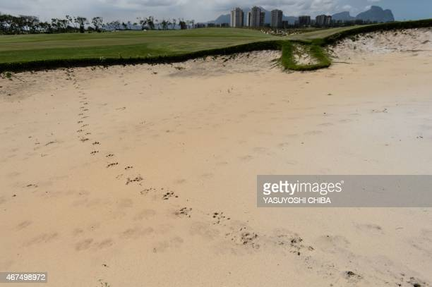 Hoofmarks from a capybara can be seen in the new golf course under construction for the Rio 2016 Olympic Games in Rio de Janeiro Brazil on March 25...