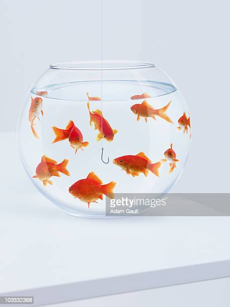 Hook hanging in fishbowl with goldfish