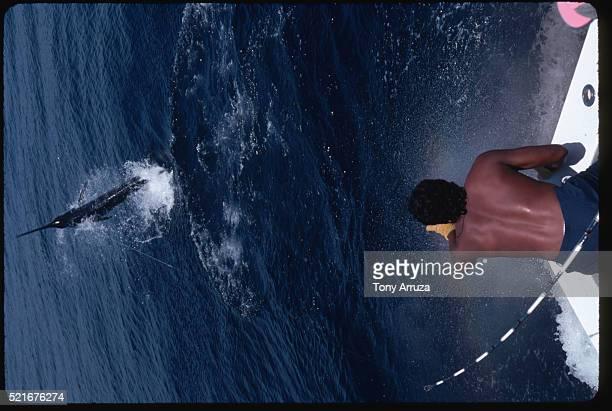 Hooked Blue Marlin