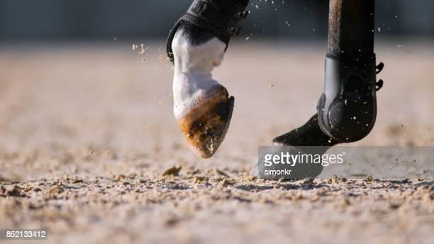 Pezuñas de caballo corriendo en arena soleada