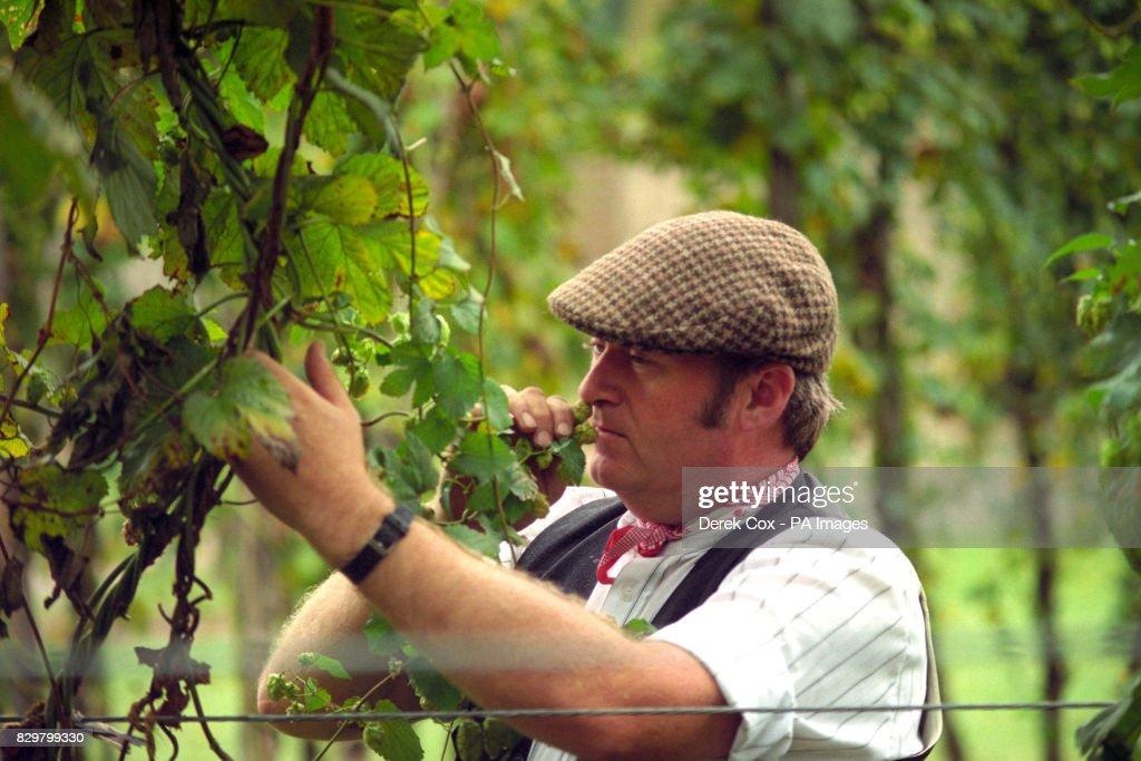 News - Hop Garden Manager Steve Millner - Museum of Kent Life ...