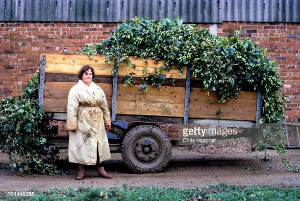 Hop picker stands by a trailer full of hops on a farm near Cranbrook in Kent, United Kingdom, September 1970.