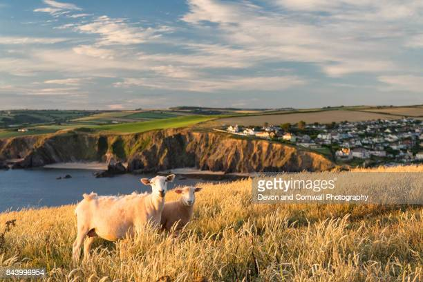hope cove, devon - southwest england stock photos and pictures