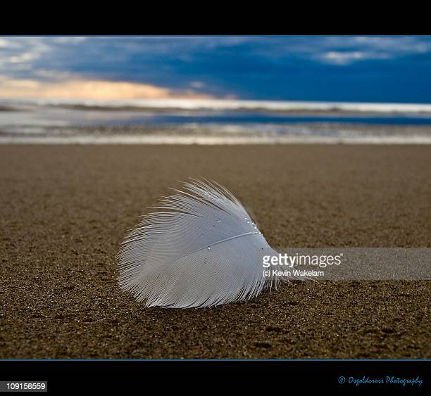 """""""hope"""" is the thing with feathers - blackpool beach stock pictures, royalty-free photos & images"""