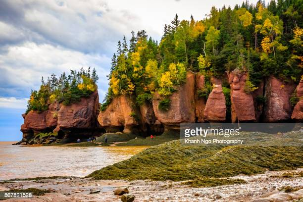 hopewell rocks in new brunswick, canada - khanh ngo stock pictures, royalty-free photos & images