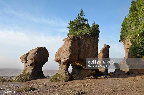 hopewell rocks in the sunrise - rock stock pictures, royalty-free photos & images