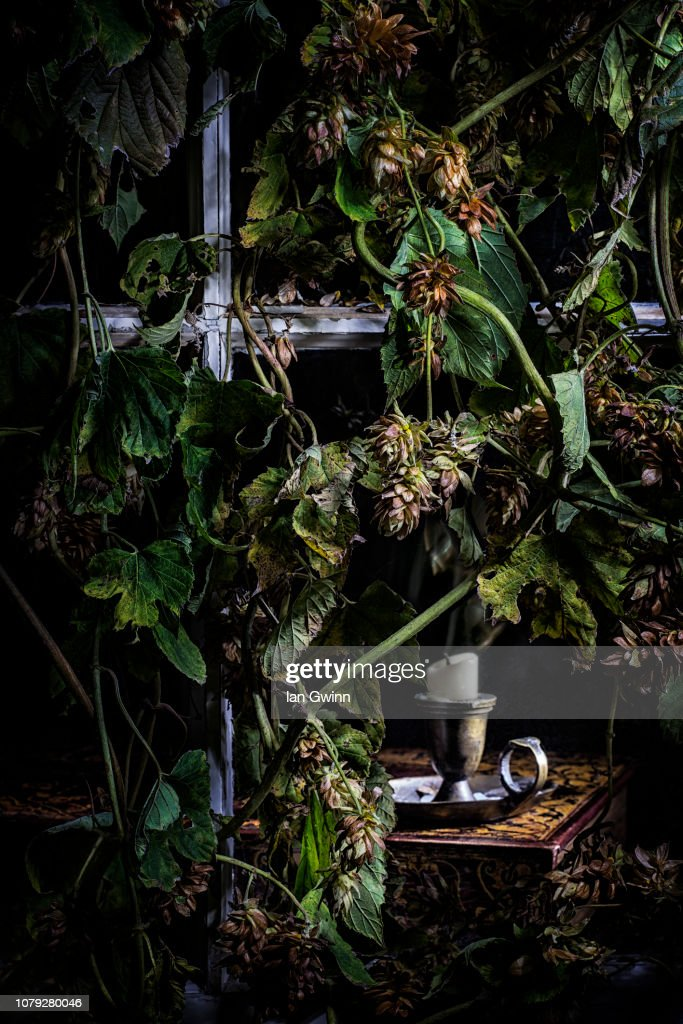 Hops and Candle_1 : Stock Photo