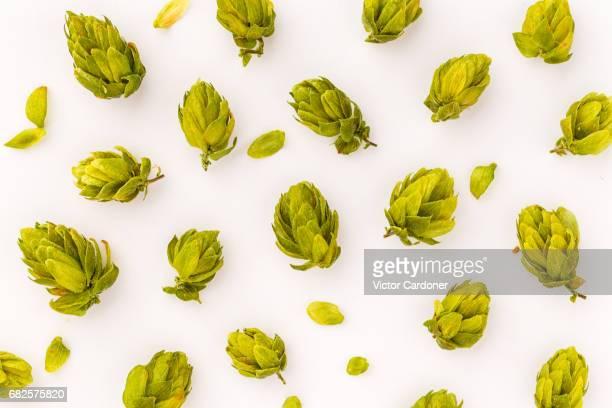 hops - comida flores fotografías e imágenes de stock