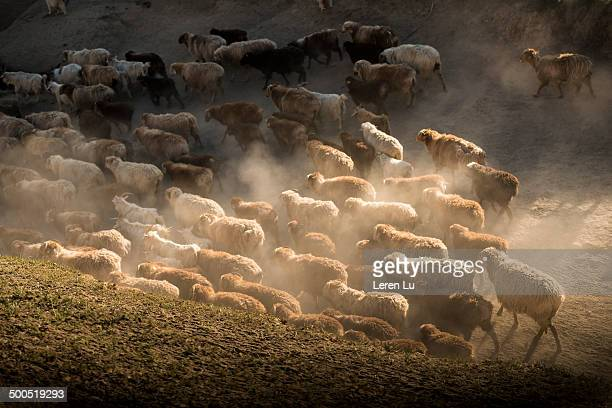 Hordes migrating on wild highland