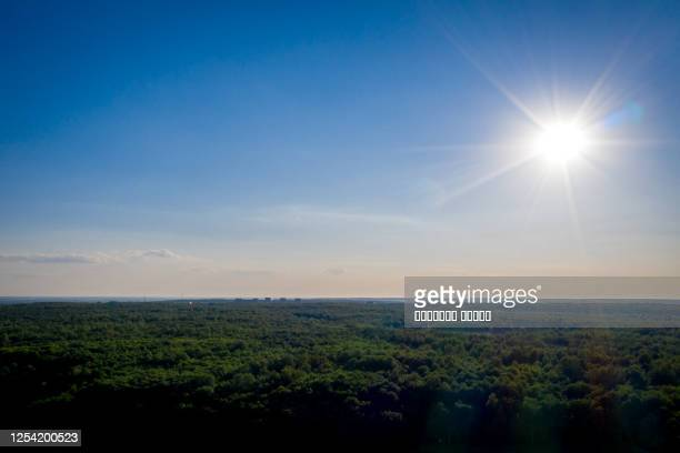 horizon landscape, sun shining in the clear blue sky over green forest park - clear sky foto e immagini stock