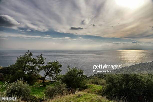 horizon with pine trees and clouds - emreturanphoto stock pictures, royalty-free photos & images
