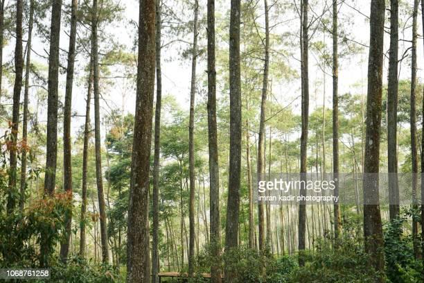horizontal and wide shoot for wooden trees. - árvore de folha caduca - fotografias e filmes do acervo