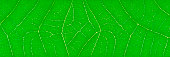https://www.istockphoto.com/photo/horizontal-green-leaf-texture-for-pattern-and-background-gm841415766-137228637
