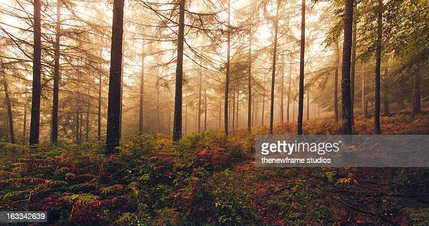 Horizontal landscape with fog trees in autumn