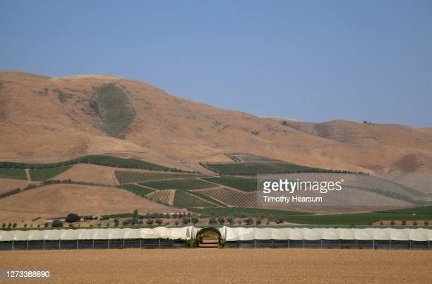 horizontal rows of shade houses with a vineyard patchwork on a hillside beyond - timothy hearsum stock pictures, royalty-free photos & images