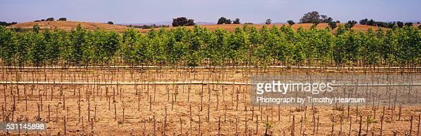 horizontal rows of trees on a tree farm - timothy hearsum fotografías e imágenes de stock