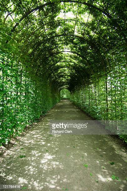 hornbeam (carpinus betulus) trained along pergola at alnwick gardens, northumberland, uk - alnwick stock pictures, royalty-free photos & images