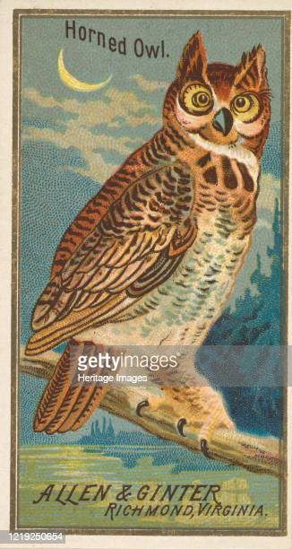 Horned Owl, from the Birds of America series for Allen & Ginter Cigarettes Brands, 1888. Artist Allen & Ginter.