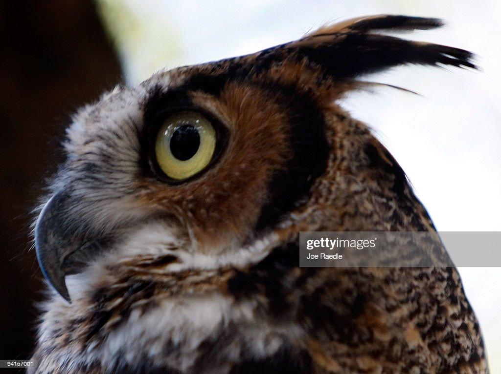 Nonprofit Bird Sanctuary Struggles To Survive Economic Downturn : News Photo