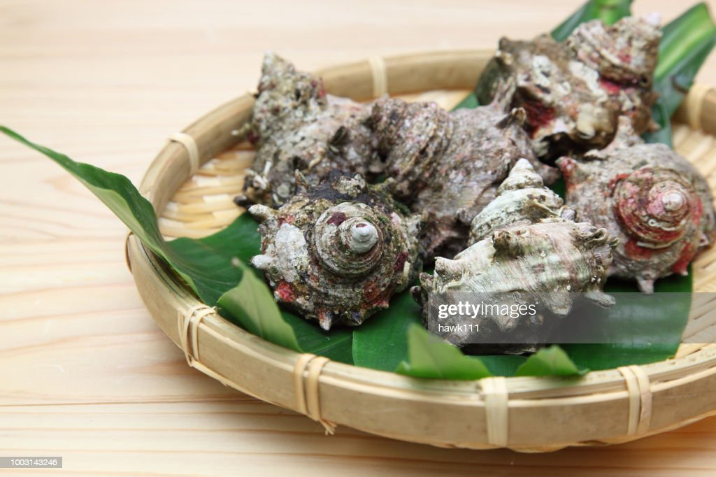 Horned Turban on the bamboo colander : Stock Photo