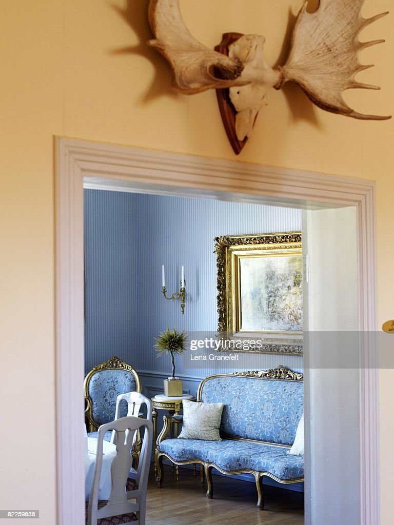 Horns from an elk on a wall. : Stock Photo