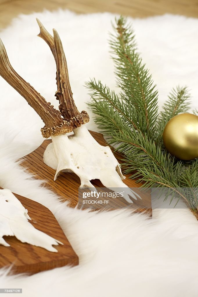 Horns on fur carpet, fir branch and Christmas tree ball : ストックフォト