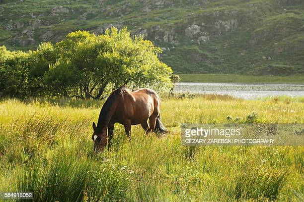 Hors at the Gap of Dunlop in Kerry, Ireland.