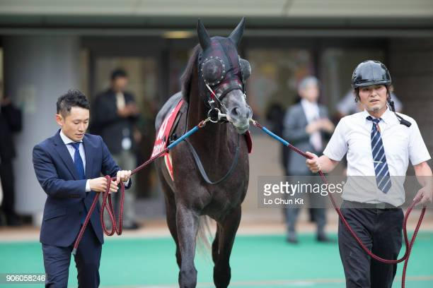 Horse A Shin Hikari being led around the paddock during the Race 11 Mainichi Okan at Tokyo Racecourse on October 11 2015 in Tokyo Japan