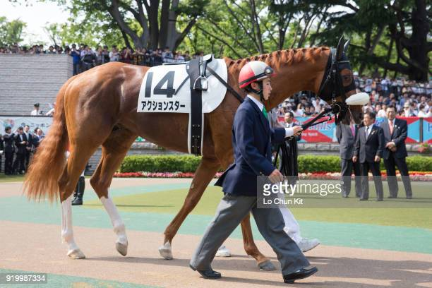 Horse Action Star being led around the paddock during Tokyo Yushun at Tokyo Racecourse on May 26 2013 in Tokyo Japan Tokyo Yushun Japanese Derby is...