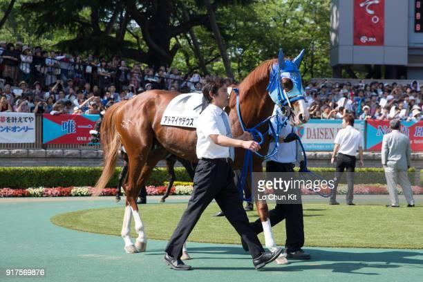 Horse Admire Deus being led around the paddock during Tokyo Yushun at Tokyo Racecourse on June 1 2014 in Tokyo Japan Tokyo Yushun Japanese Derby is...