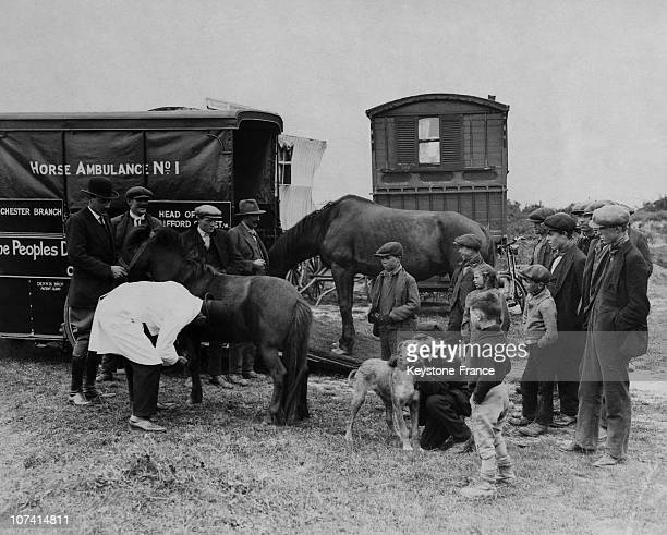 Horse Ambulance In A Gipsy Camp At Epson In Uk