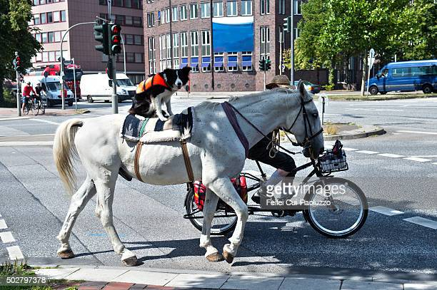 A horse and a dog at Street of Hamburg Germany