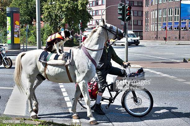 a horse and a dog at street of hamburg germany - downtown comedy duo stock pictures, royalty-free photos & images