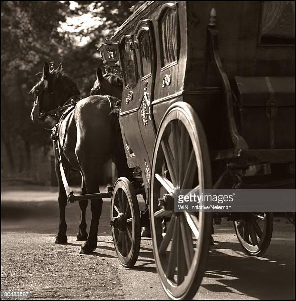 horse and buggy - koets stockfoto's en -beelden