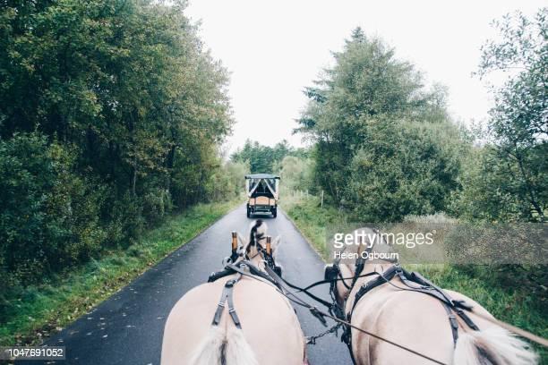 horse and carriage riding in north jutland, denmark - koets stockfoto's en -beelden