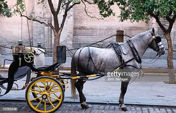 horse and carriage, sevilla, spain - 四輪馬車 ストックフォトと画像