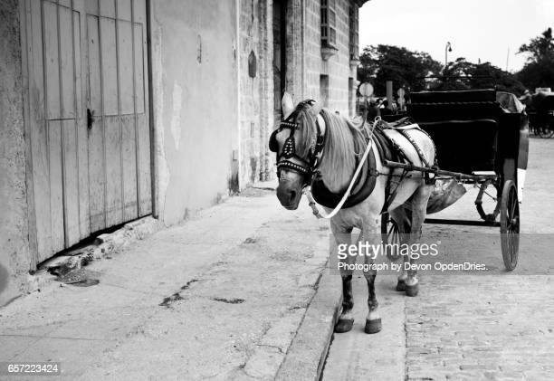 Horse and Cart Havana