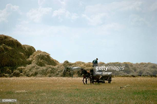 Horse and Cart in a Hay Field